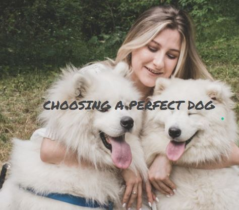 Which Dog Is Best For Me