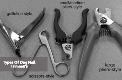 Four Core Types Of Dog Nail Trimmers