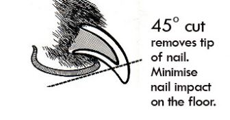 Nail Cutting Angles for dogs