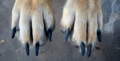 How To Cut Black Dog Nails
