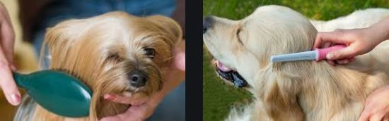 How To Brush Dog Hairs Properly