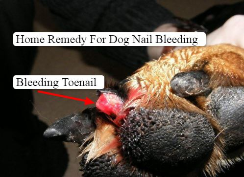 Home Remedy For Dog Nail Bleeding