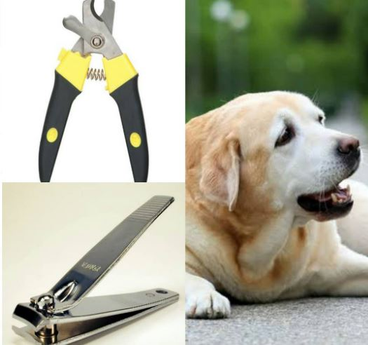 Can You Cut Dog's Nails With Human Clippers