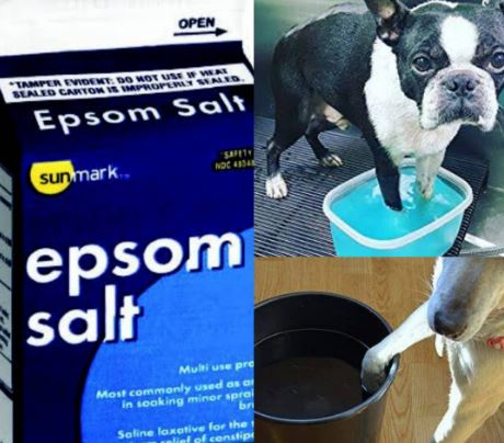 Epsom Salt For Swollen Dog Paw Infection
