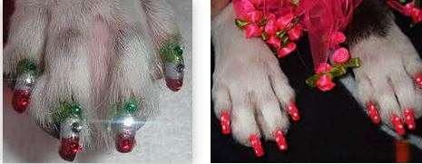 Painting Dog Nails with Human Polish