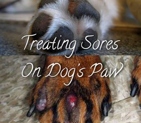Sores On My Dog's Paws