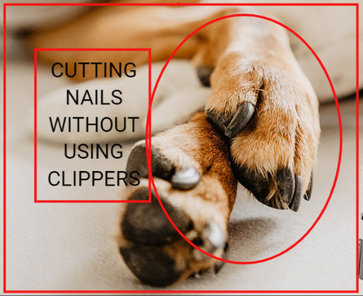 How To Cut Dog's Nails Without Nail Clippers