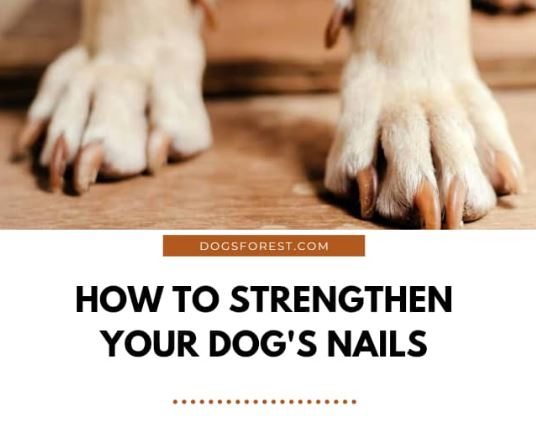 How To Strengthen Dog Nails