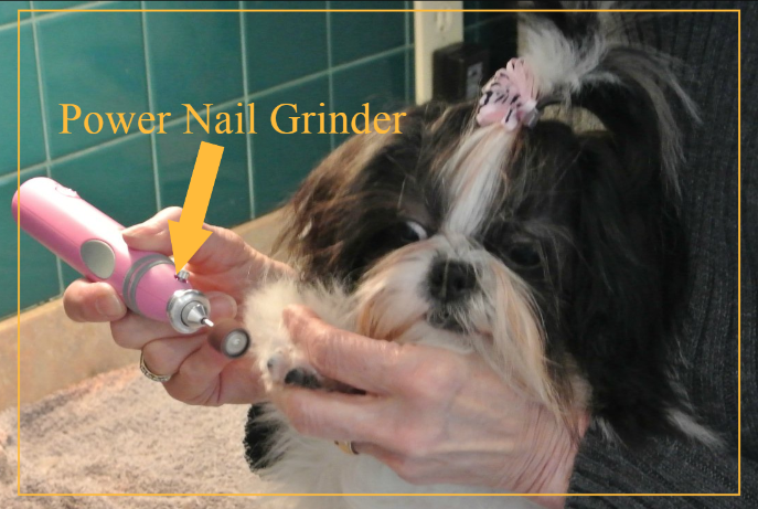 Trim Dog Nails Without Clippers