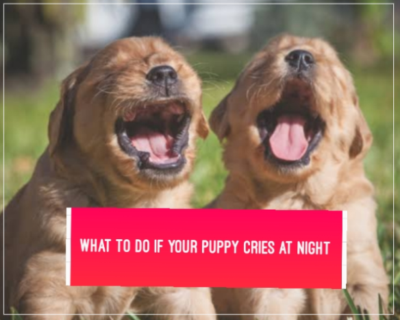What To Do If Your Puppy Cries At Night