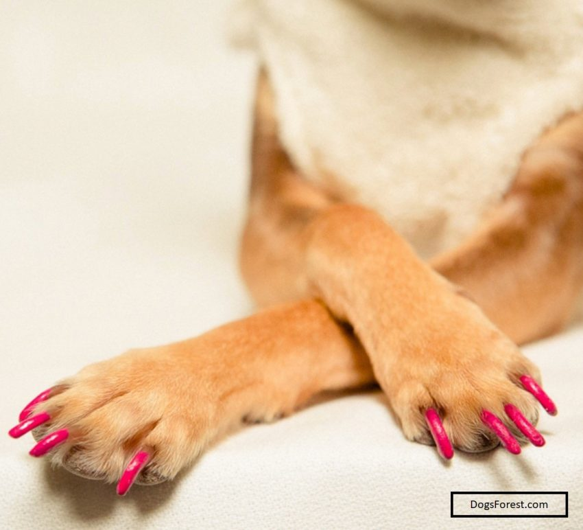 Can I Paint My Dog's Nail?