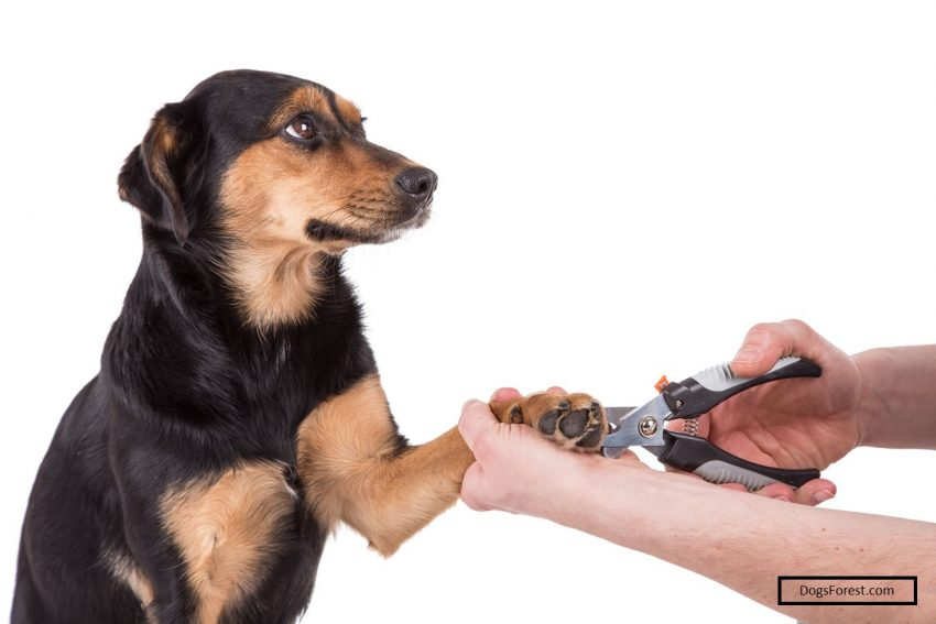 Reasons Why Dog's Refuses To Get Their Nails Cut